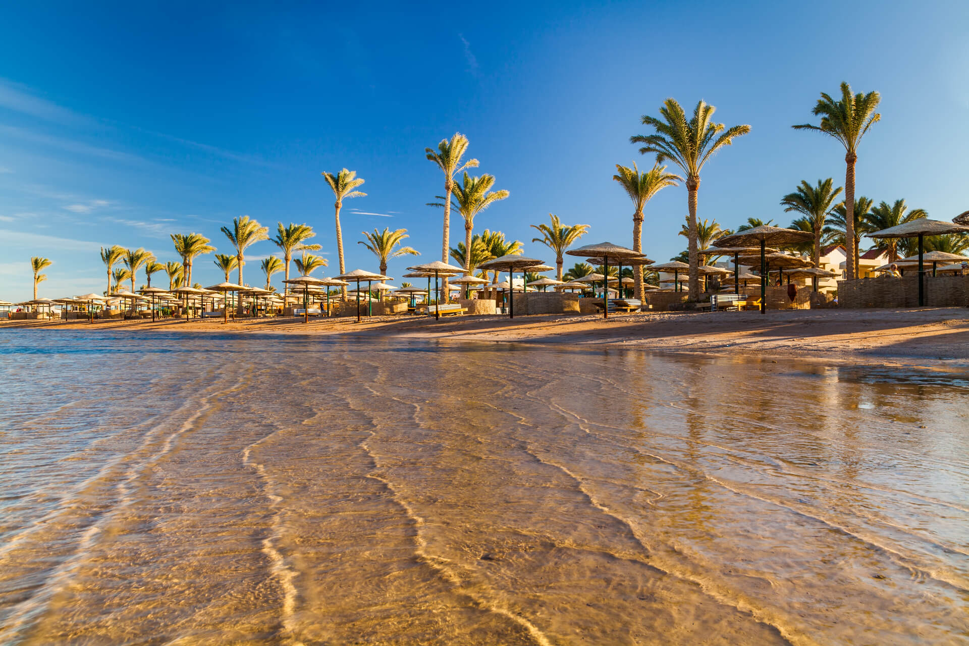 beach with palm trees at sunset. Egypt
